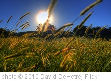 'sun grass' photo (c) 2010, David DeHetre - license: http://creativecommons.org/licenses/by/2.0/