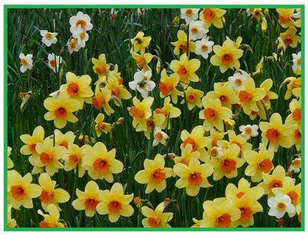 Afbeeldingsresultaten voor zondag in de lente