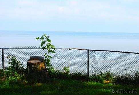 10. Lookout stump-kab