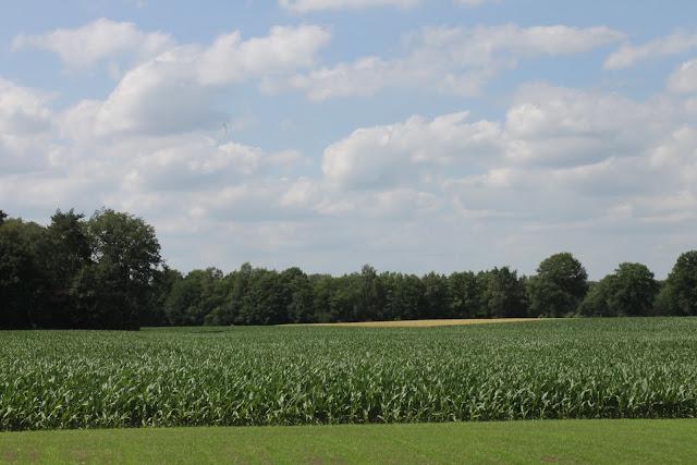 Uitzicht over de maisvelden - www.LandgoedDeKniep.nl