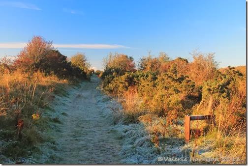15-frosty-lane
