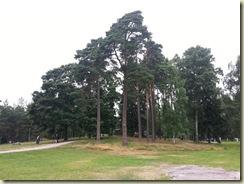 20130724_Sibelius Park (Small)