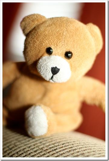 little teddy IMG_4385