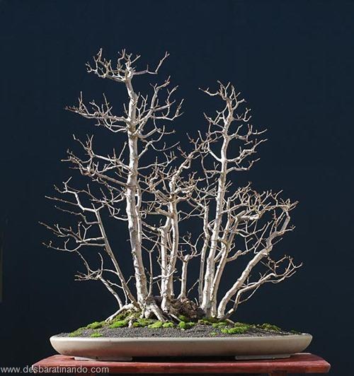 bonsais arvores em miniatura desbaratinando (17)