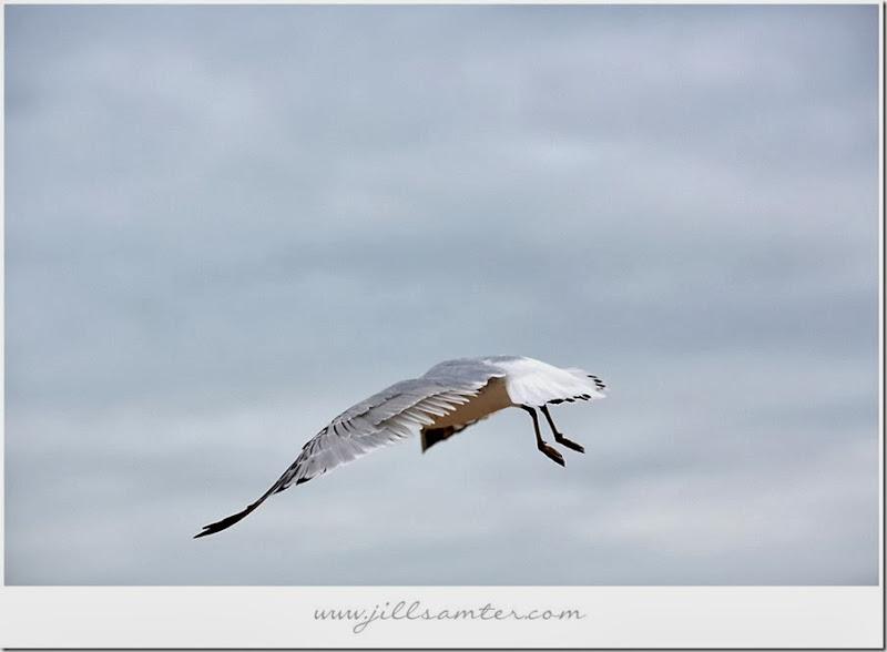 birdstand-fly2
