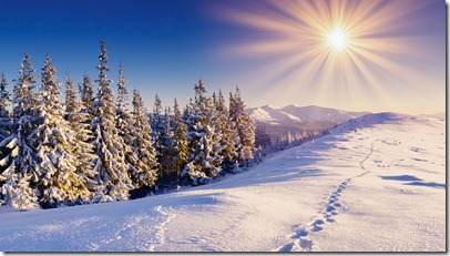 winter-forest-snow-pat-sky-sun-ray-nature