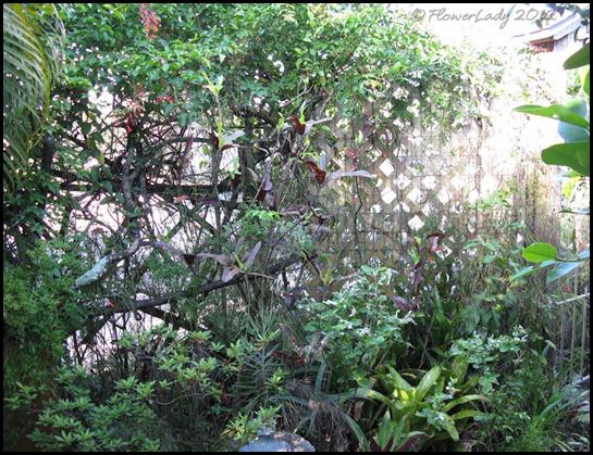 06-08 jungle12