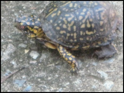 turtle 4a_thumb[2]