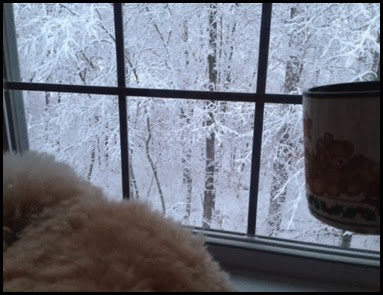 snowy morning 8 my view
