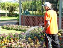 jardineiro regando orquídeas