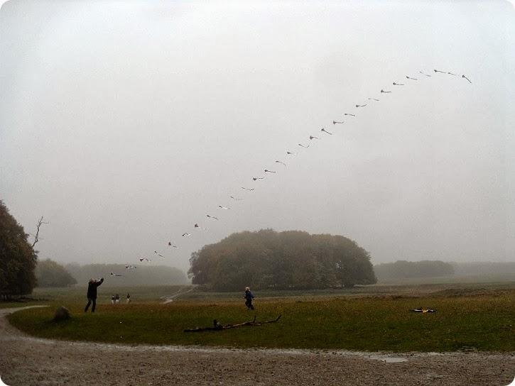 Drager i Dyrehaven - oktober 2013