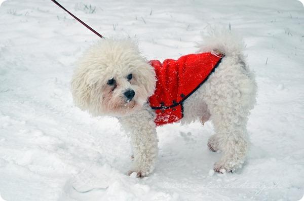 Schneesonntag 20zwölf (2)