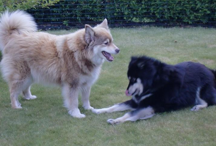 Vrengen.) Kira på besøk juli 2012009