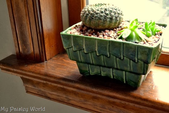 succulent13