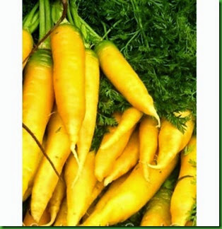 Cenoura Sol Amarelo