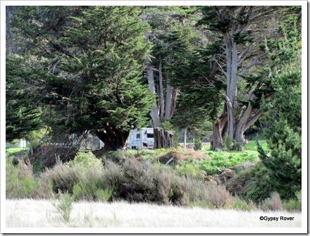 Gypsy Rover hidden in the Macrocarpa's at the Tarawera Cafe, Napier Taupo highway.