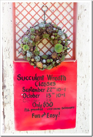 121003_Morningsun_succ_wreath_signs