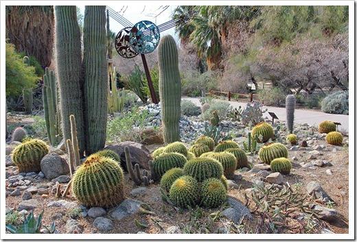 110223_living_desert