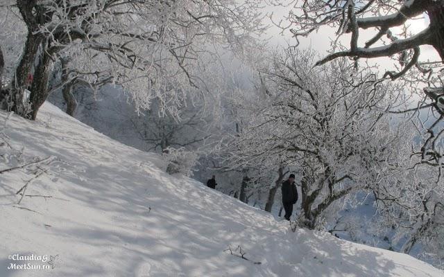 Macin-iarna-40_rw.jpg