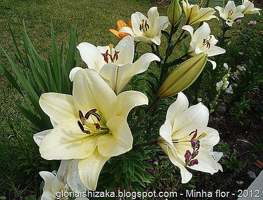 Gloria Ishizaka - minha flor 2