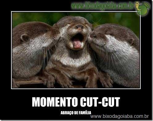 momento-cut-cut