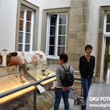 001-05_10_13-Rosensteinmuseum-29.jpg