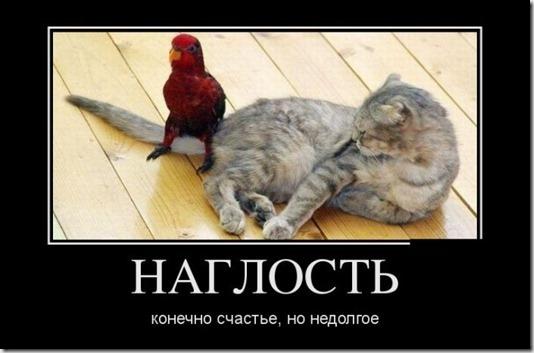 1336729414_demotivator-15