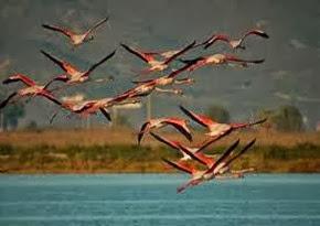 Amazing Pictures of Animals, Photo, Nature, Incredibel, Funny, Zoo, Flamingos or Flamingoes, Phoenicopteridae,  Aves, Bird, Alex (6)