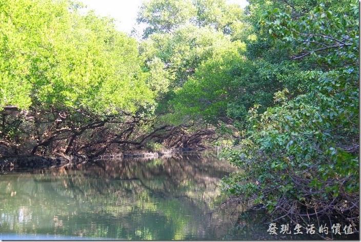 台南-四草竹筏綠色隧道。即將進入綠色隧道,後面這邊就自己欣賞。
