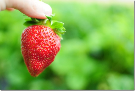Strawberry Picking & Marcus band 048