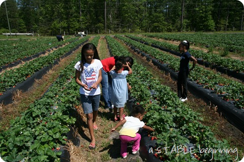 Strawberry picking 013
