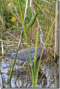 Bird hiding in grass
