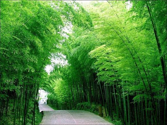 Shunan Bamboo Forest