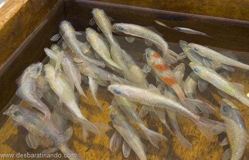 peixes pintados em 3d desbaratinando (2)