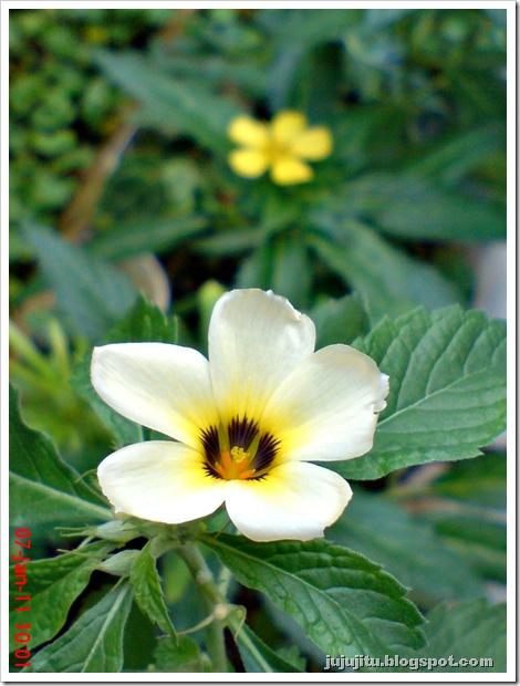 bunga pukul 8 5