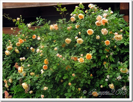 Crown Princess Margareta (2)