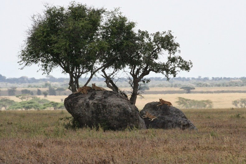 kopje-serengeti-6