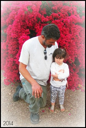 daddy cindy flower bush mad