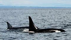granny-j2-orca