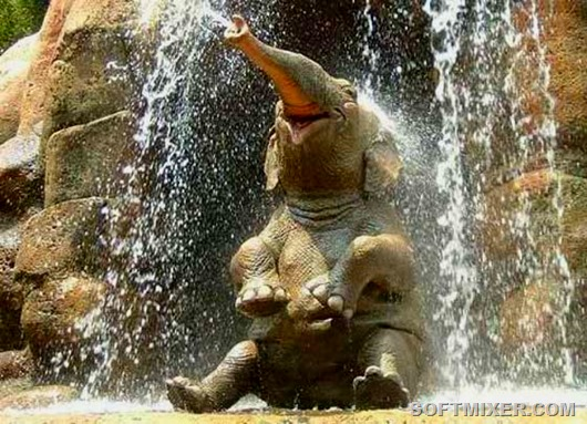 slon[1]