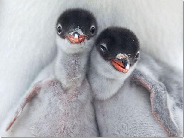 funny-animals-cute-36