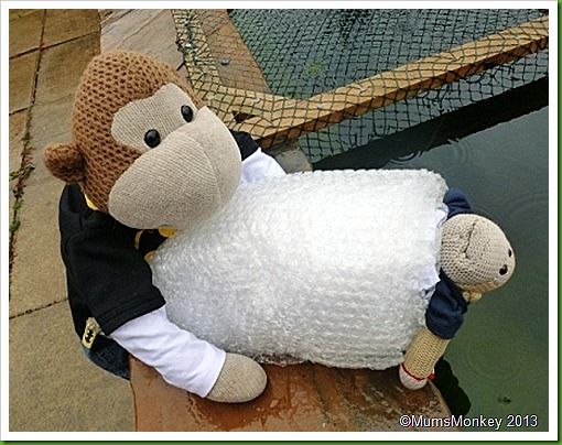 water zorbing bubblewrap