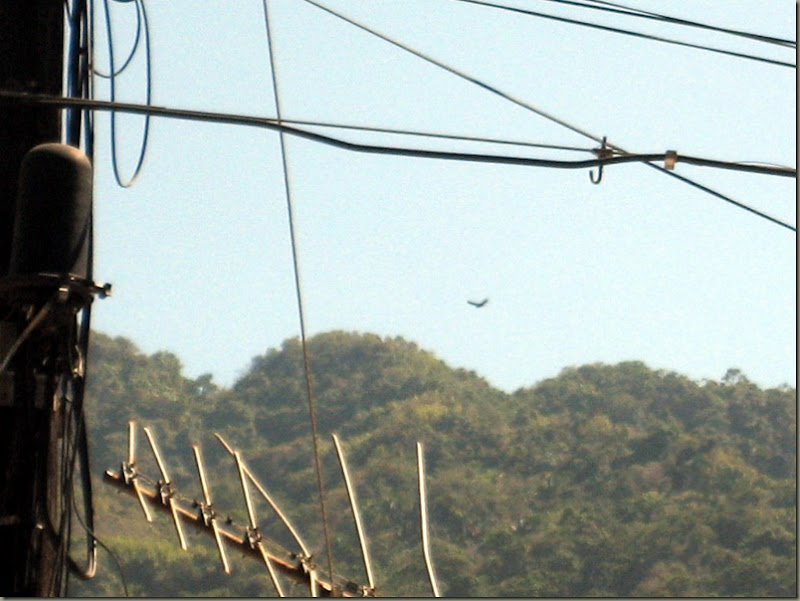 Wires, Aerial, Buzzard, Mountains