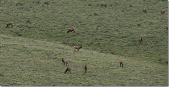 453 Elk (640x324)