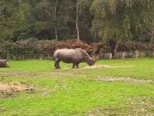 2013.10.26-010 rhinocéros