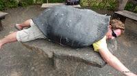 letzte Schildkröte ihrer Art