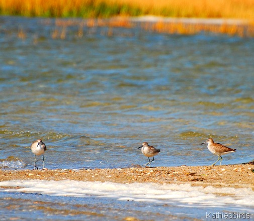 2. willets-kab