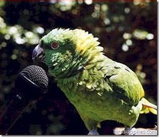 birdsupplies.com