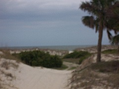 cumberland-island 047