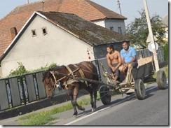 08-24-30 005 RT 800X traction animale Ukraine